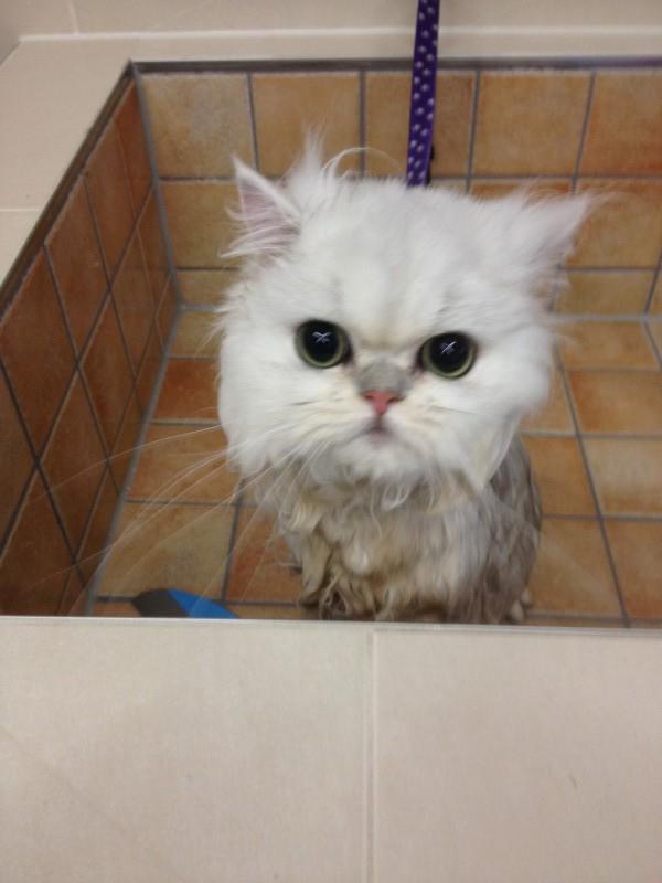 wassen in bad..
